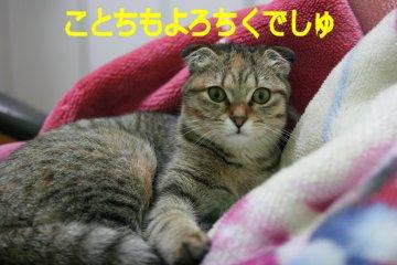 suzu141.jpg