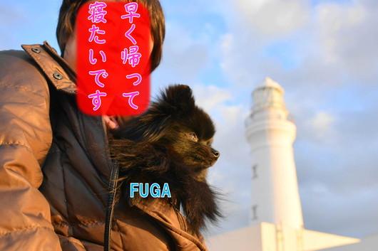 530px20140113_FUGA-0002.jpg