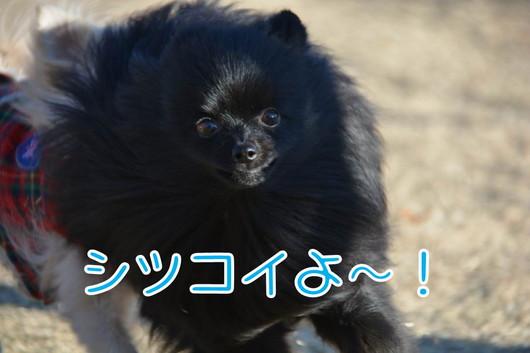 530px20140122_sibling-04-3.jpg