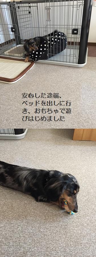 cats10084.jpg