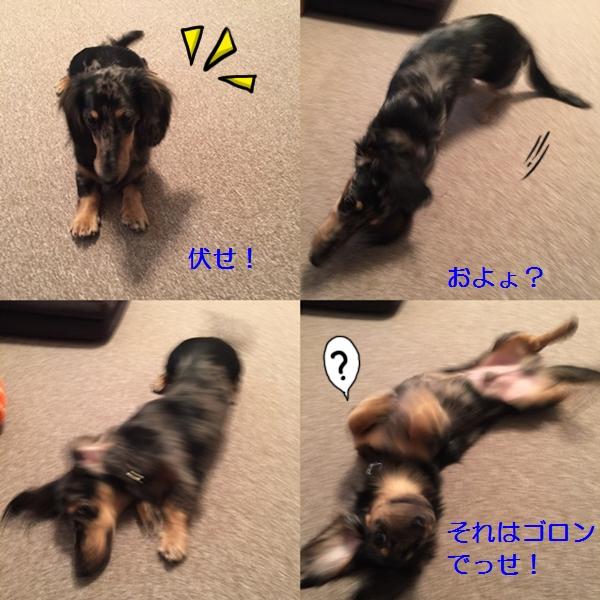 cats201410221.jpg