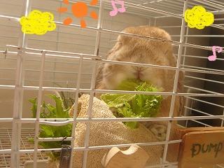 お野菜よぉ