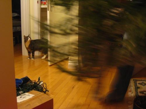クリスマス・ツリーと猫