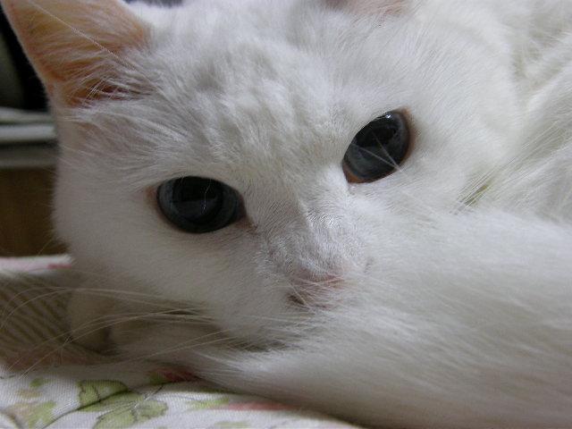 cat 074