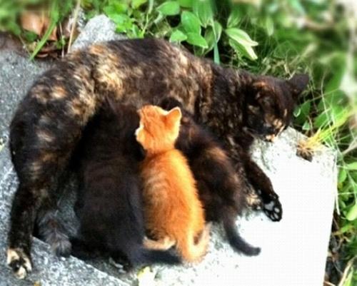 黒ぴーとお母さんと兄弟 授乳