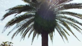 南国っぽい木