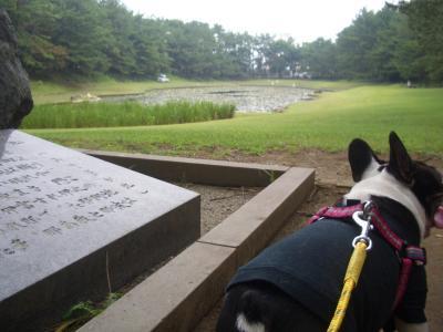 池があるよ~