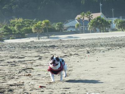 砂浜駆ける