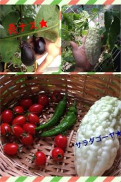 今年の野菜10