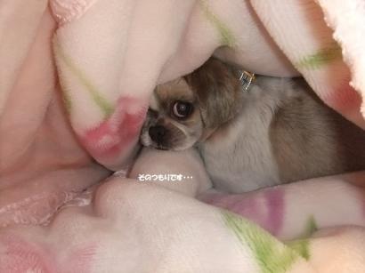 毛布の妖精になります。