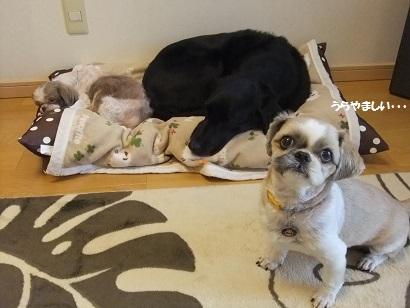 こうやって二人で仲良く寝たいねん。