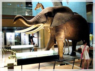 IMG_5709いのちの旅博物館