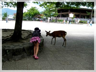 IMG_5864宮島