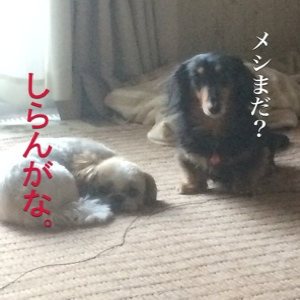 fc2blog_201411211807425eb.jpg