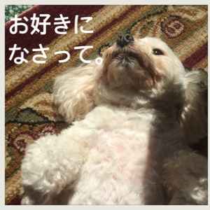 fc2blog_20141203142925c33.jpg