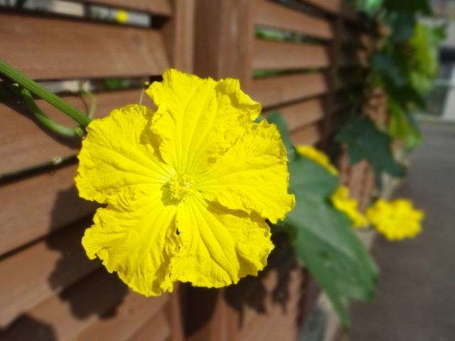 黄色い花_20130829