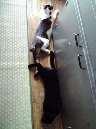 暑がる猫たち