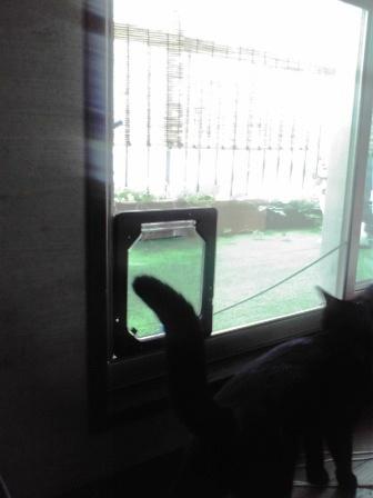 猫用扉(4)