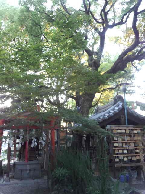 若一神社 (3)