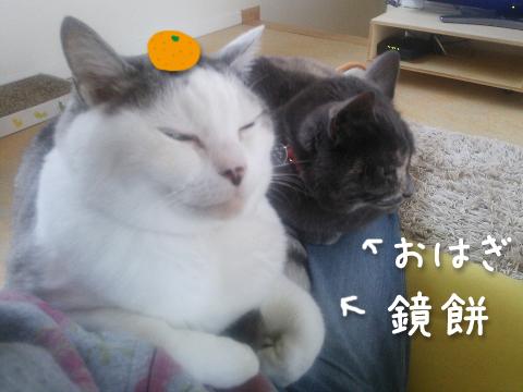 DSC_0211r.jpg
