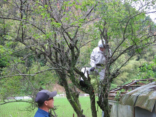 木に登る駆リーダー
