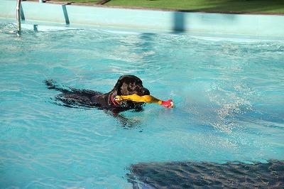 マル泳ぐ1