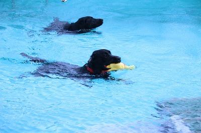 一緒に泳ぐ2