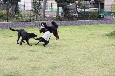 黒子3匹ワラワラ2