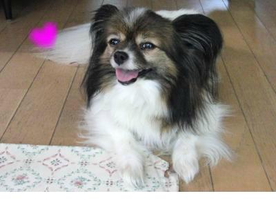 snap_ladysuzu_201296102933.jpg