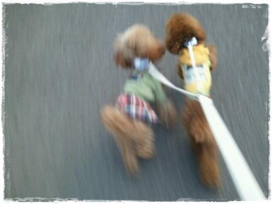 LaLaたる散歩2