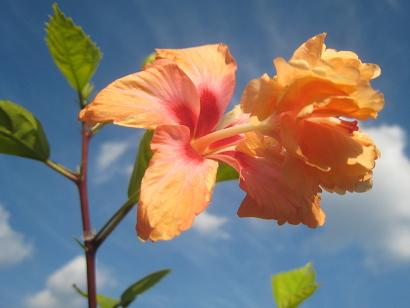 10/26 オレンジフラミンゴ