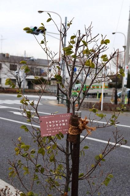 02まだ咲かない