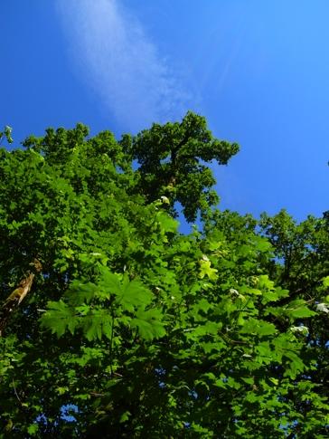 fc2blog_20120712171326fbc.jpg