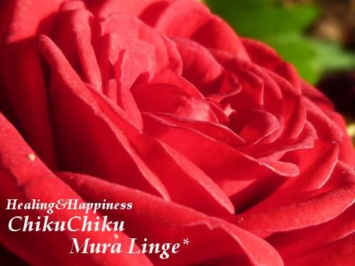 真っ赤な薔薇のお花★