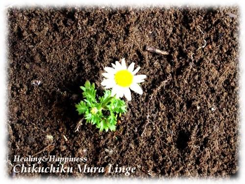一輪のお花★