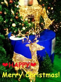 クリスマスのトナカイさん★