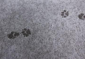 snow20141.jpg