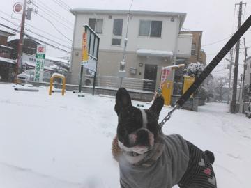 snow20142.jpg