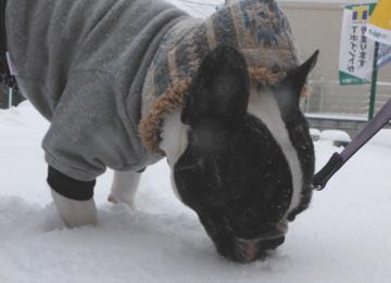 snow20143.jpg