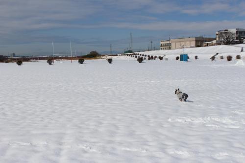 snow20147_convert_20140209181425.jpg