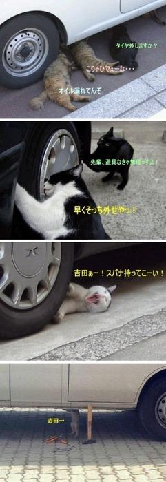 猫タイヤ交換