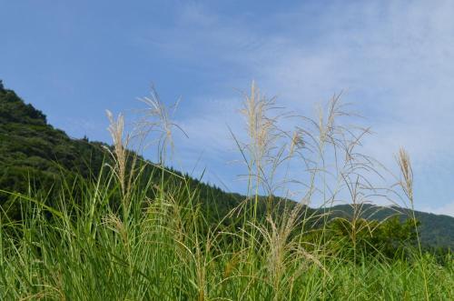 08172013fukusima-tanada27.jpg
