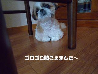 2012053013.jpg