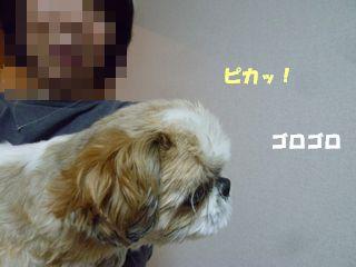 2012053015.jpg