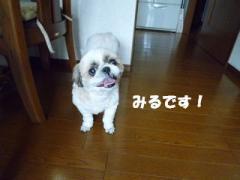 2012061201.jpg