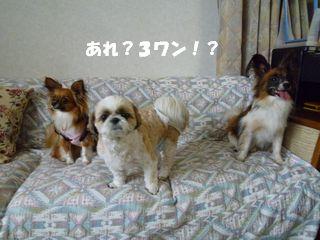 2012061220.jpg