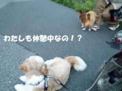 2012082516.jpg
