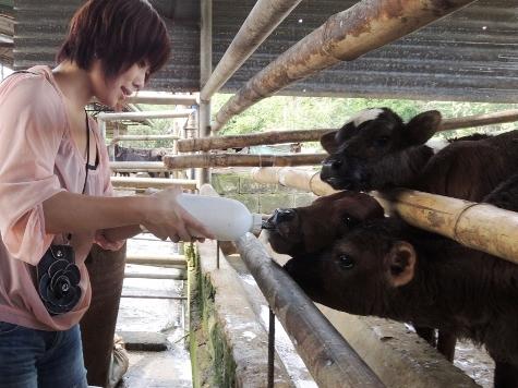 cows (26)