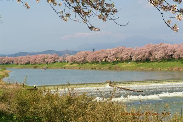 20120428白石川堤