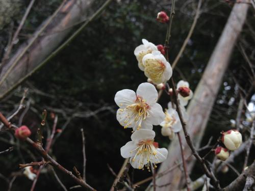 春はもうすぐそこ!
